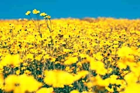 我家的花最近葉子黃的厲害 澆水往葉子上噴水都沒有效果 我也不知道這花叫什麼名字下名有圖片
