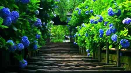 华龙皇家陵园,华龙皇家陵园的介绍