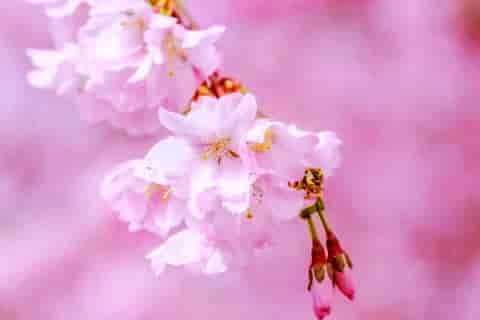 【实用】春二年级春雨作文400字3篇